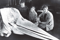 Steven Holladay, Miriam Spann, Dr. J. Edgar Smallwood | Summer 1988. Studying Whale Skull