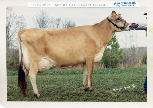 Prize winning Randleigh cow Randleigh Duncan Gussie