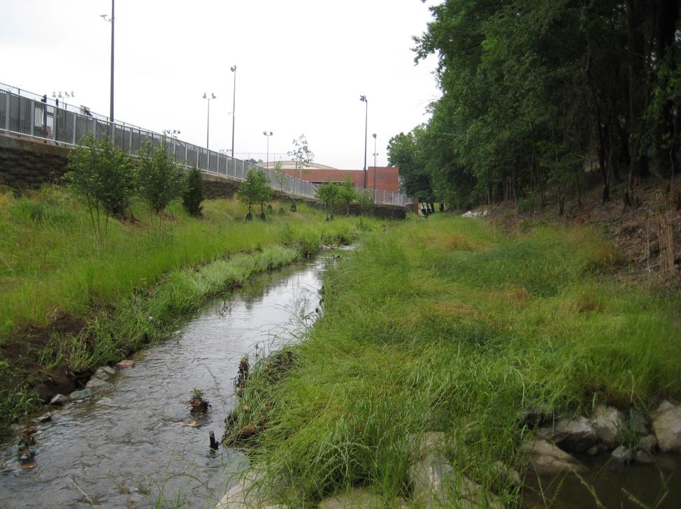 Rocky Branch Stream