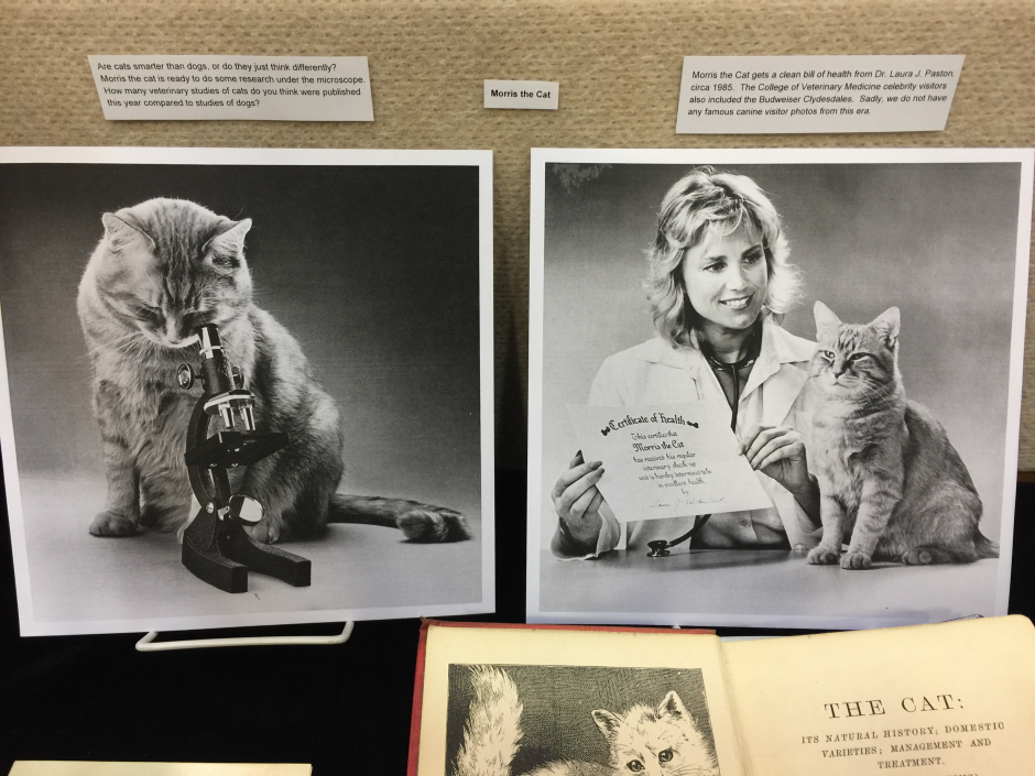 Photos of Morris the Cat, from the Terrence M. Curtin Papers (MC 00420)