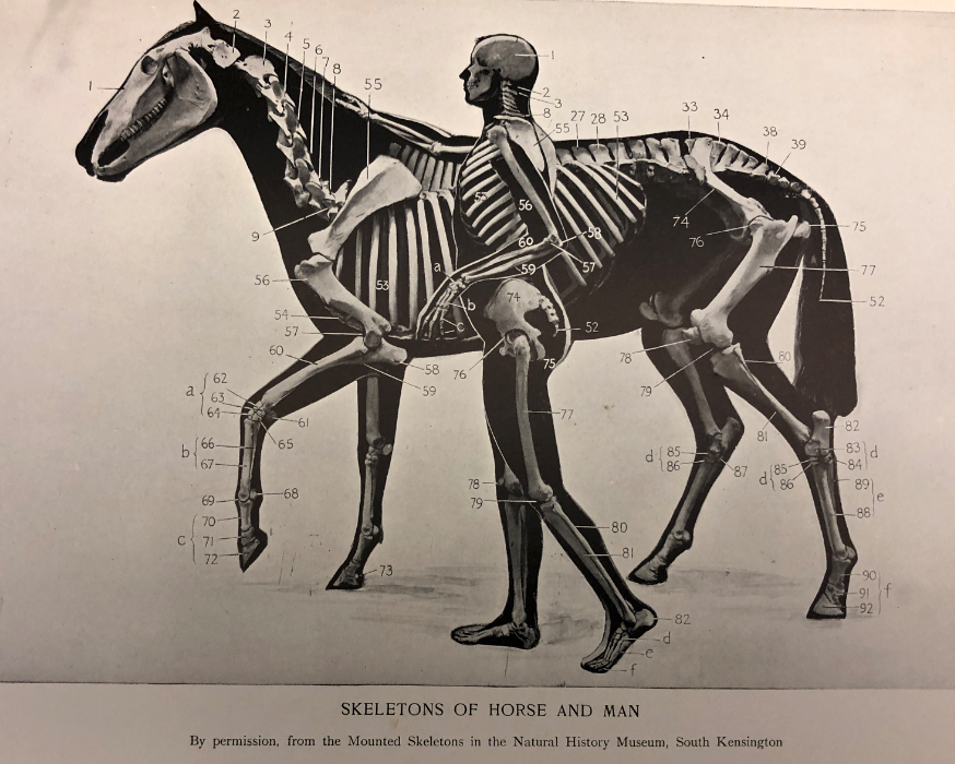 Celebrating the History of Horses and Humans Competing Together ...