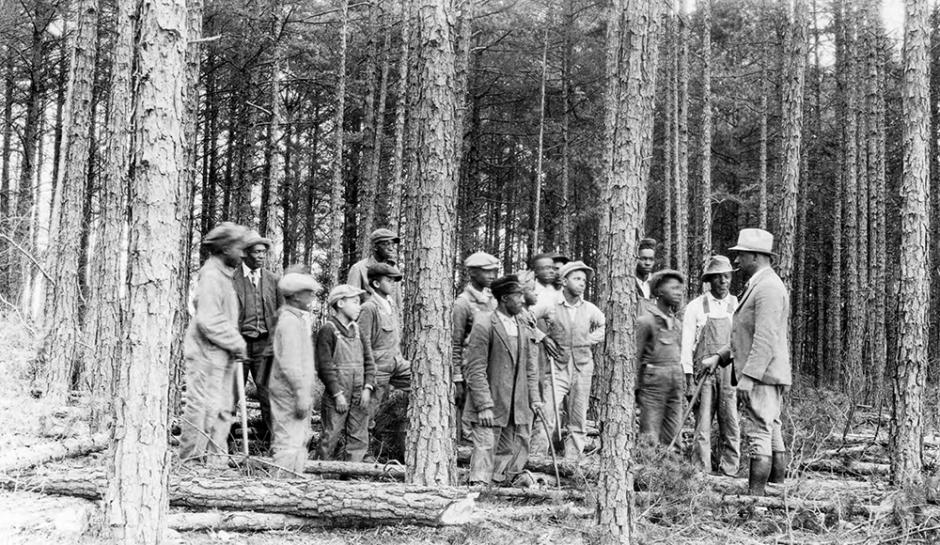 Agent J. W. Jeffries and African American farmers learning about methods of pines as cash crop