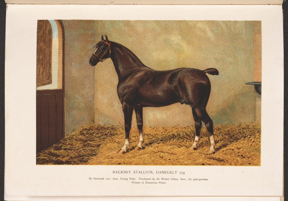 The horse, its treatment in health and disease with a complete guide to breeding, training and management, by J. Wortley Axe (1906)