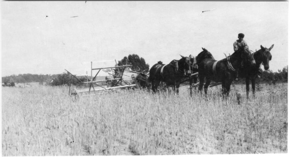 In the 1910s most North Carolina farmers still relied on horse-drawn equipment