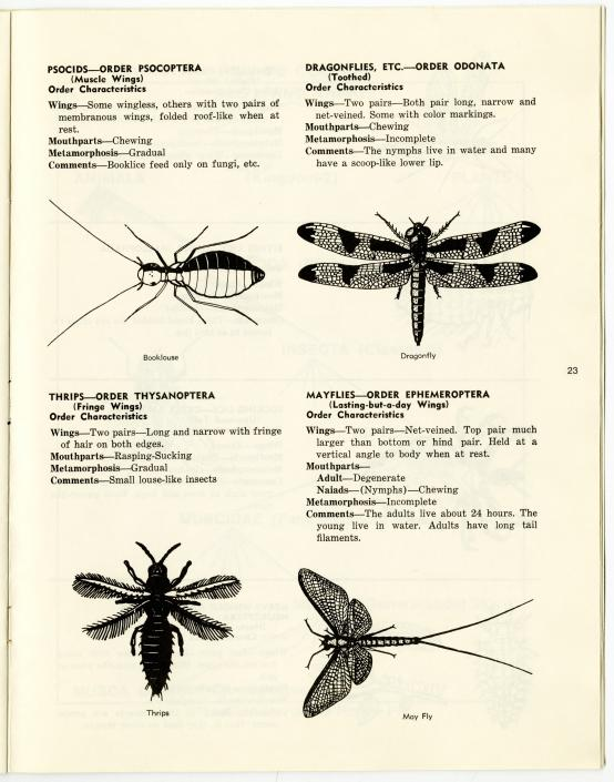 Dragonflies and other bugs featured in a 4-H Entomology collection and study work book.