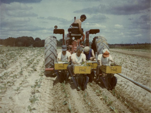 Field hands work in North Carolina agriculture