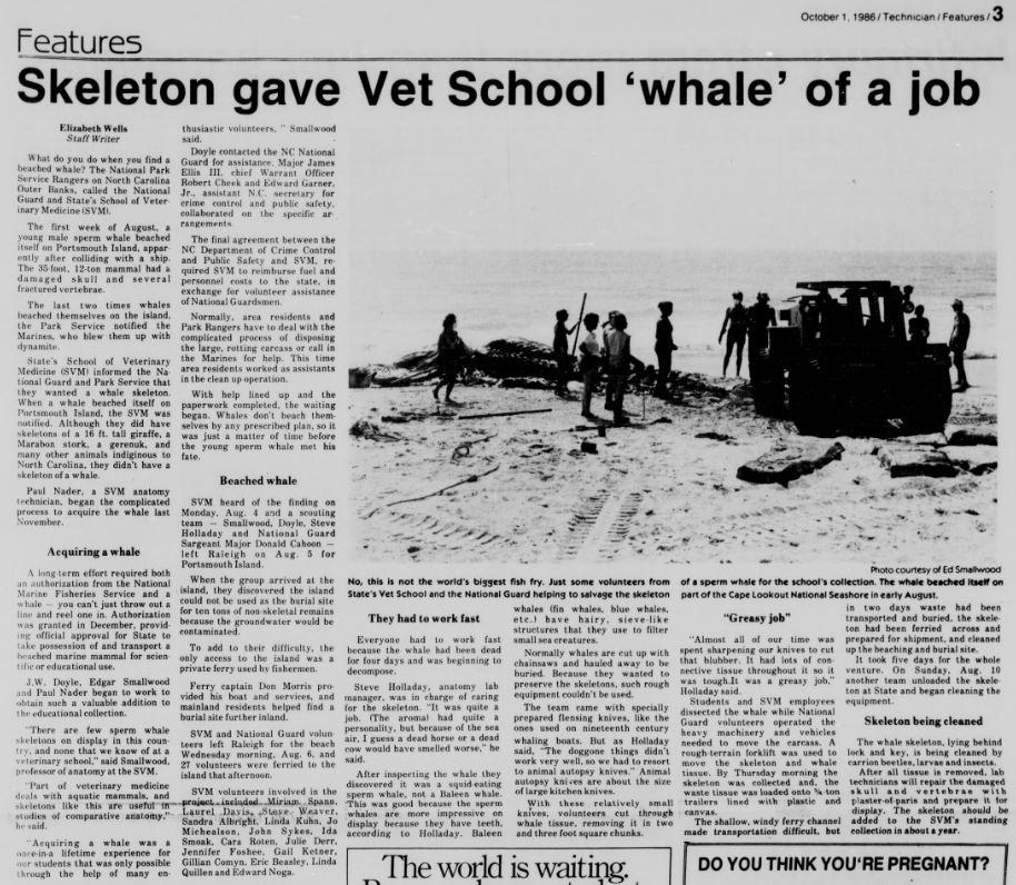 """Skeleton gave Vet School 'whale' of a job"""