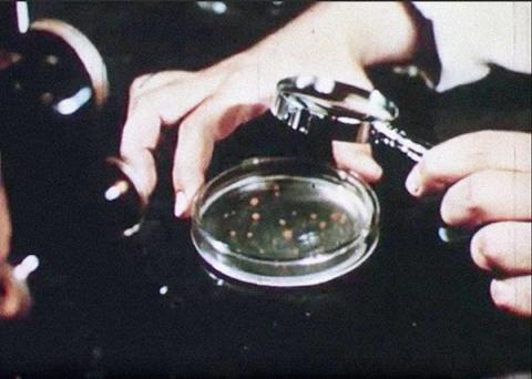 Magnifying glass held over petri dish.