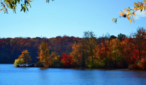 Blue water of Lake Raleigh under the blue sky and fall foliage
