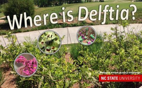 Where is Delftia?