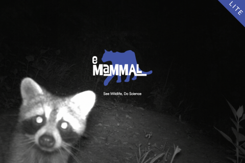One of many animals to be identified in eMammal Lite