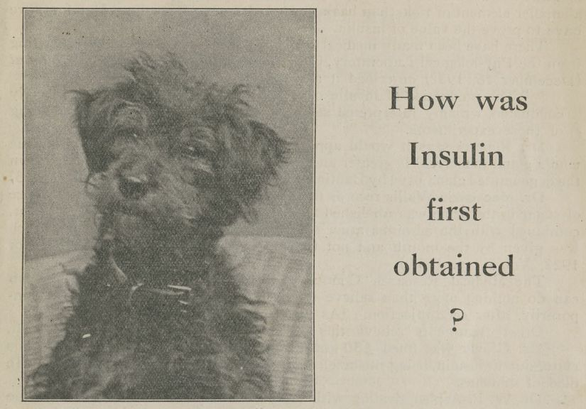 "A picture of a small, black dog alongside the words ""How was insulin first obtained?"""