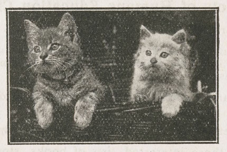 "Picture of kittens from ""The Future is with the Children,"" 1930s."