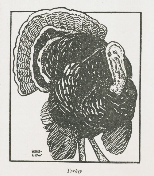 Cartoon of a male turkey from The Animals' Friend, December 1938.