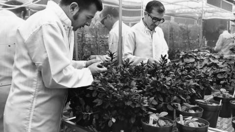 Researchers working with plants in the Phytotron, ca. 1971.