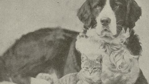 """Dog and cat from """"A Letter to Children."""" From John Ptak Collection of Animal Rights and Animal Welfare Printed Education Materials."""