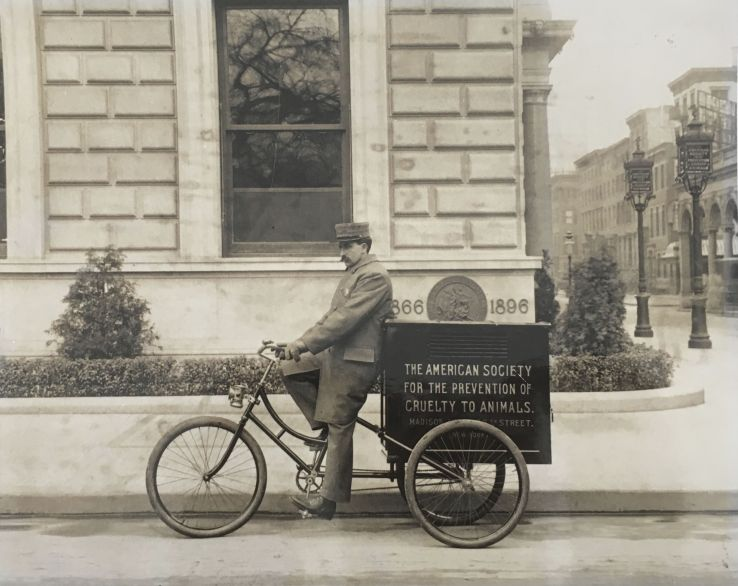 ASPCA inspector on a bicycle, date unknown, from the collection of the ASPCA.
