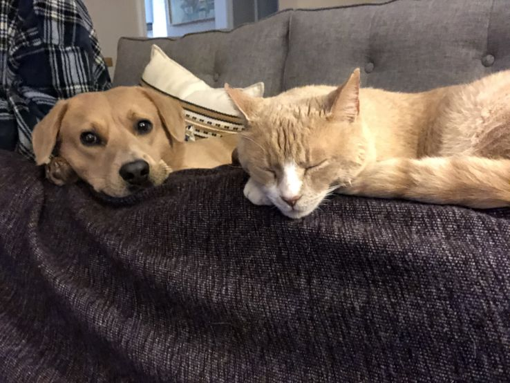 Dinko, a dog, and Archie, a cat, cuddle together during a nap