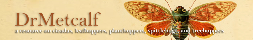 The spittlebugs of Canada: Homoptera--Cercopidae K. G. A. Hamilton